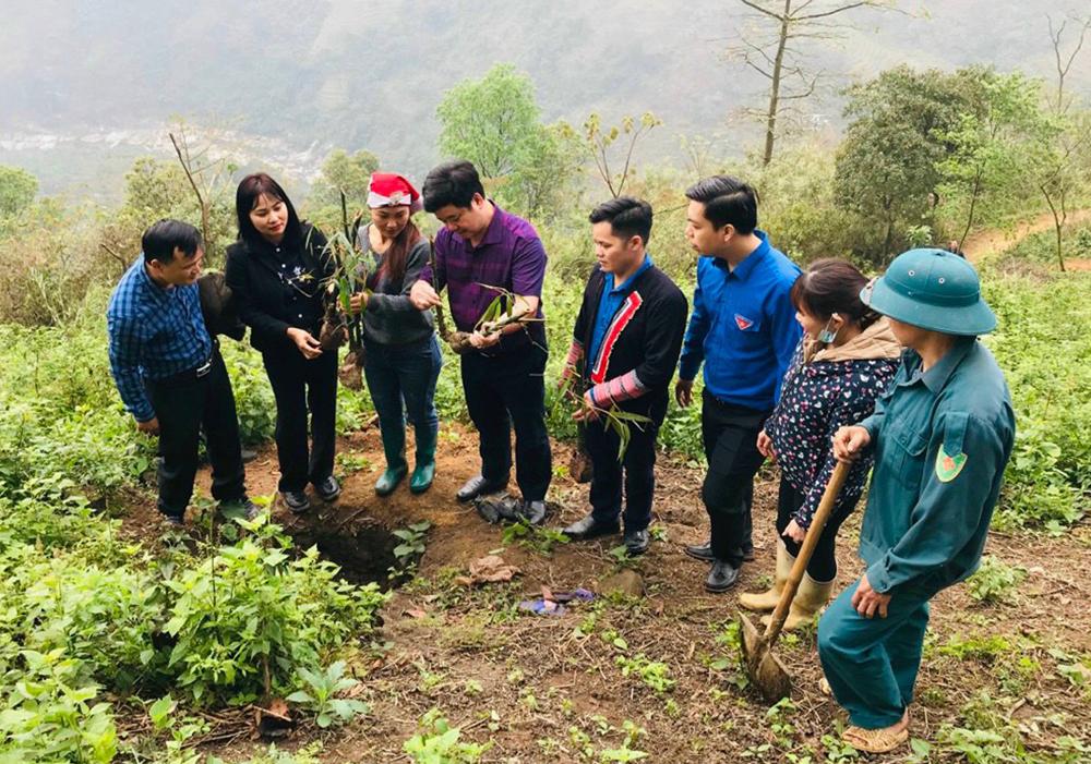 Cây măng bói được trồng thí điểm tại thôn Bản Cam.                                      (ảnh chụp trước ngày 27/4/2021)